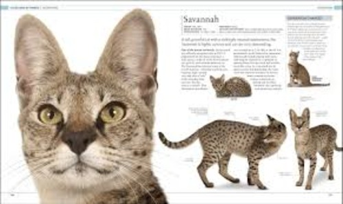 Product picture The Cat Encyclopedia: The Definitive Visual Guide